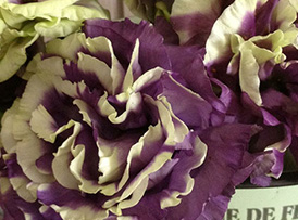 紫イメージ
